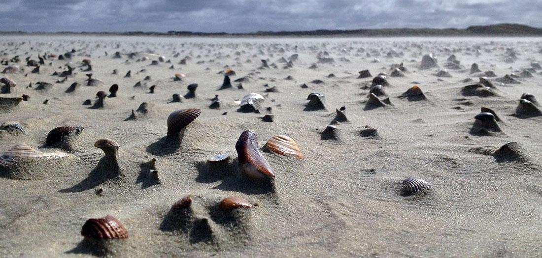 Die Nordseeinsel Borkum
